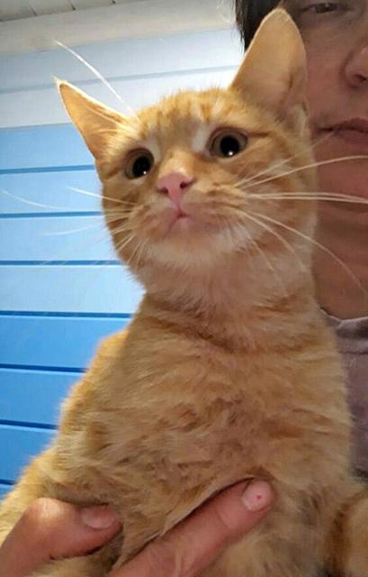 Рыжее солнышко Кузя, домашний котик-подросток в добрые руки